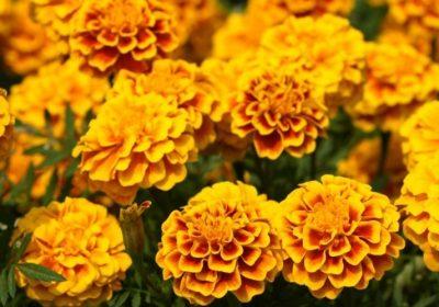 叶黄素:保护眼睛和皮肤的抗氧化剂